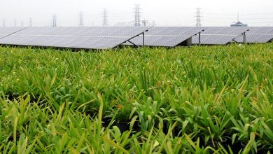 Photo of ADB agrees financing package for 50-MW solar project in Vietnam